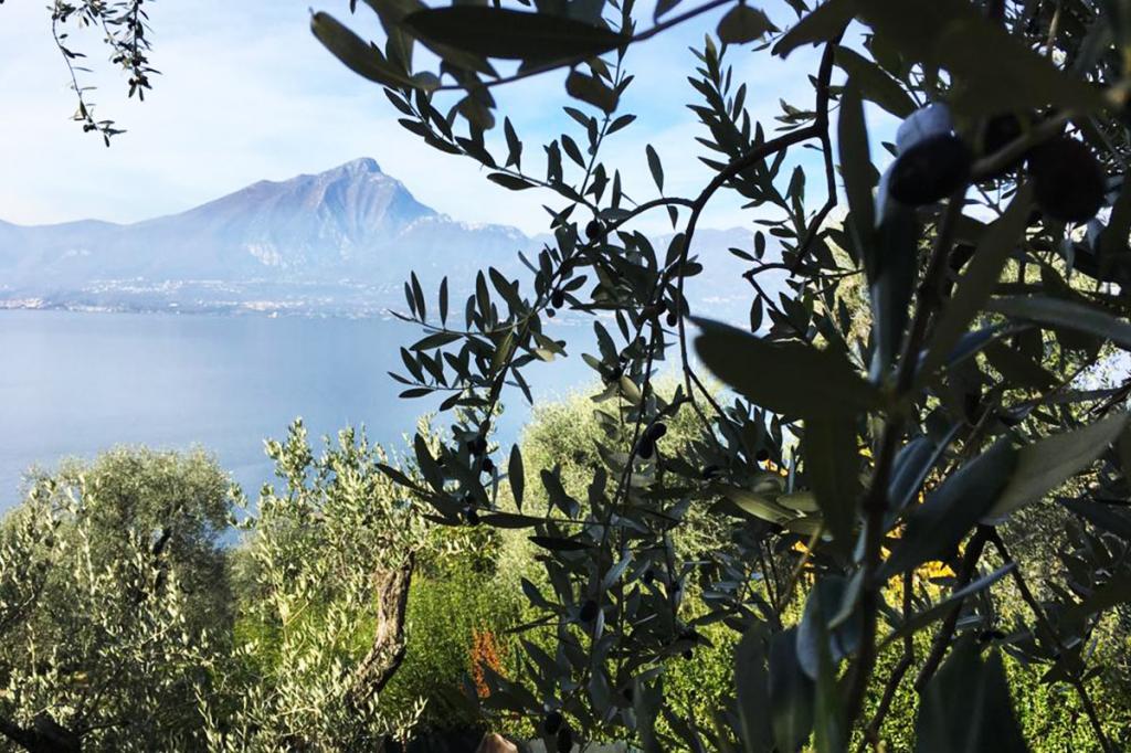 ca-del-lago-olio-di-oliva