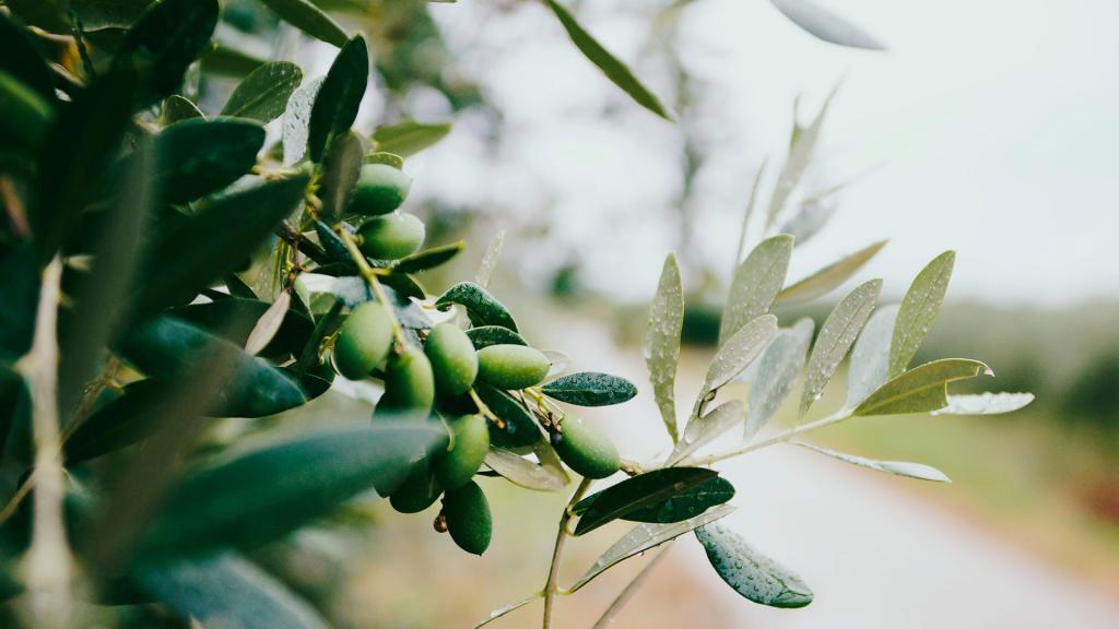 olio-di-oliva visititaly