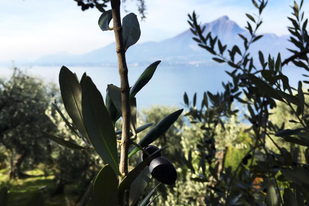 olive-lago-di-garda-olio-garda residence-ca-del-lago
