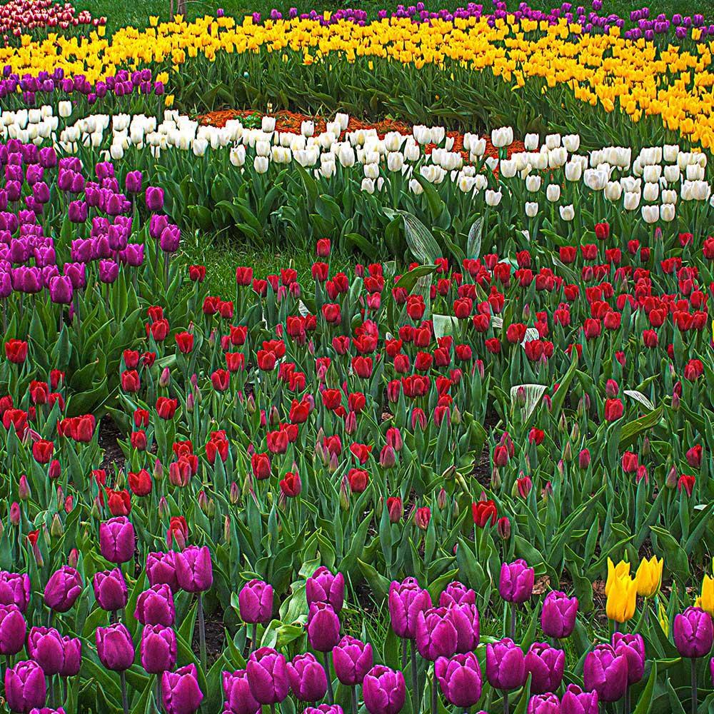 Parco-Sigurta Primavera-sul-Lago-di-Garda Residence-Ca-del-Lago tulipani