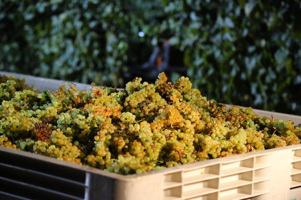 vendemmia-degustazione-vino-veneto residence-ca-del-lago